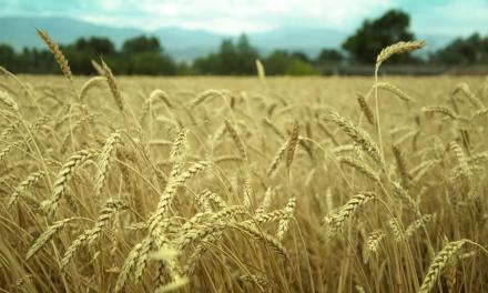 Chlorine dioxide eliminates pests feeding on grains
